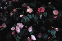 flower#1